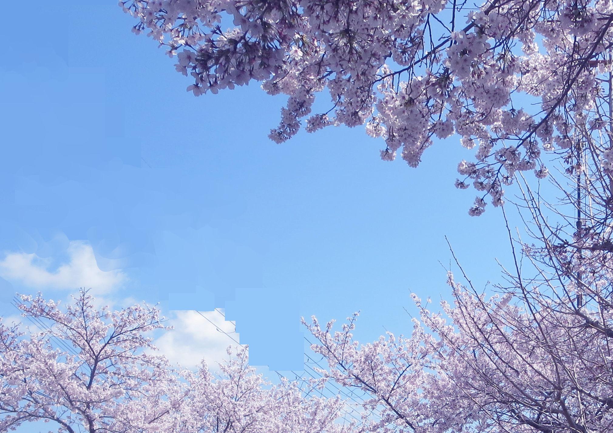 ②「近所の街路樹-2」