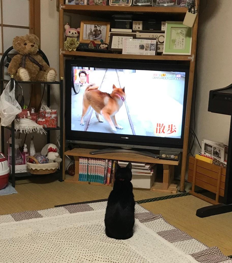 いこちゃん20200314