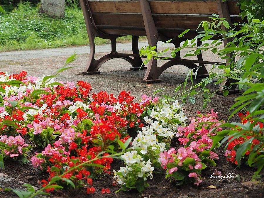 弘前城植物園 2020年6月27日