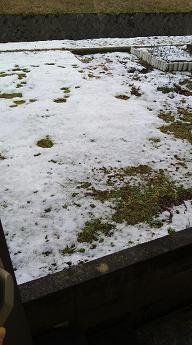 snow@20210130001.jpg