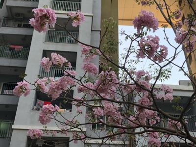 遠目だと桜っぽい