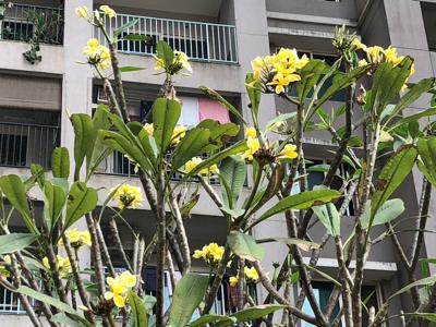アパートのお花