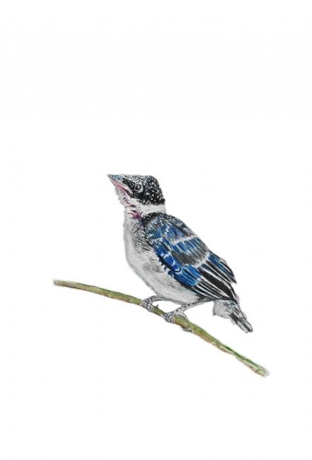 16934-オナガ幼鳥