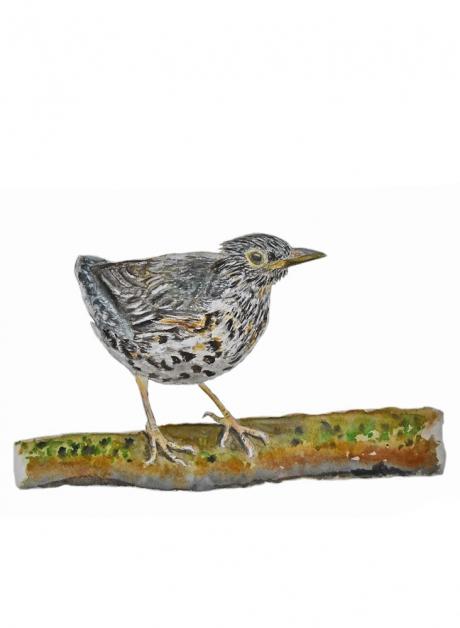 17817-クロツグミ-幼鳥2