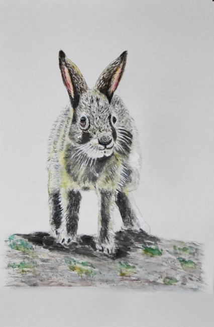 18273-ノウサギ子供