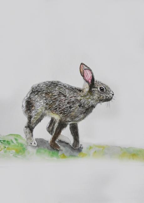 18274-ノウサギ子供