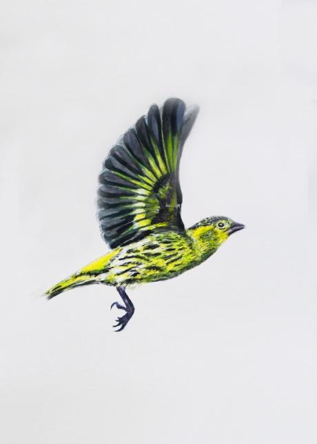 18355-マヒワ-2