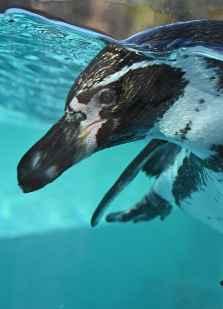 18602-ペンギン-4