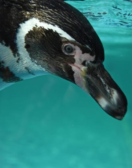 18603-ペンギン-5