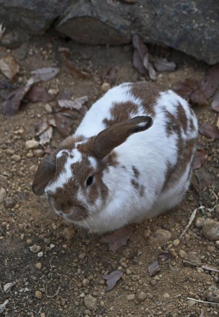 18604-ウサギ-1