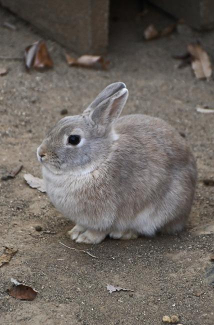 18605-ウサギ-2