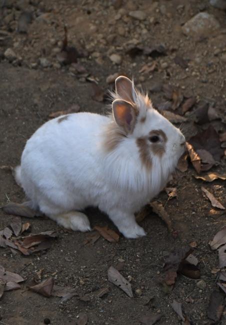 18606-ウサギ-3