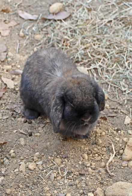 18607-ウサギ-4